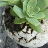 ボーン・フリー(植物鉢)