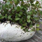ボーン・フリー2(植物鉢)